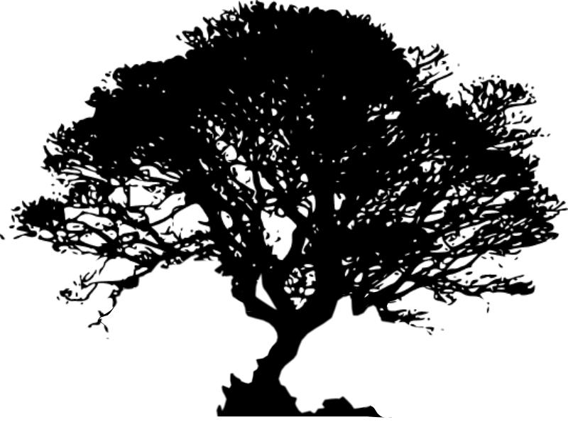Oak Tree Black And Drawing White