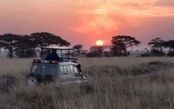 5 Things That You Must Pack for a Safari Tour