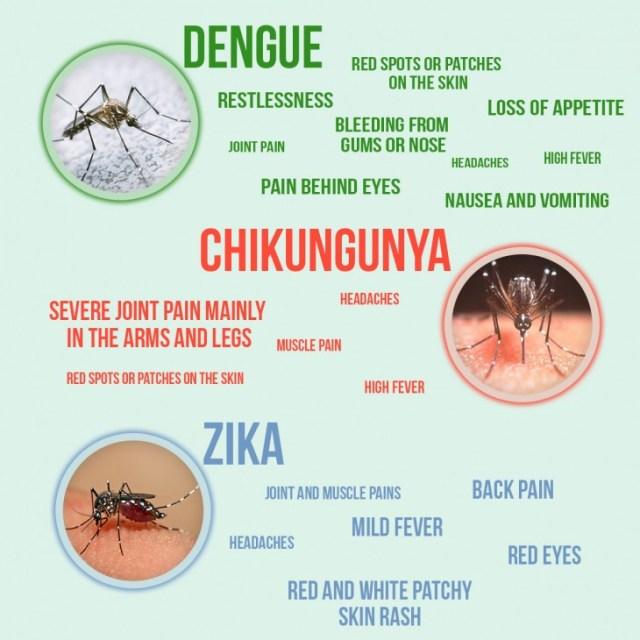 Image result for chikungunya rash