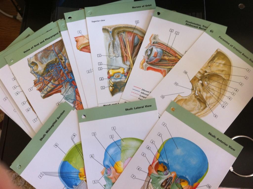 Netter S Anatomy Flash Cards Online Free | Billingss.co