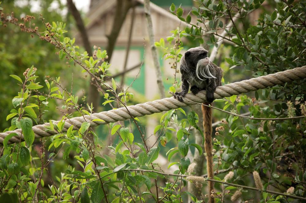 uitjes-activiteiten-kinderen-zuid-holland-dierentuin-attractiepark-musea
