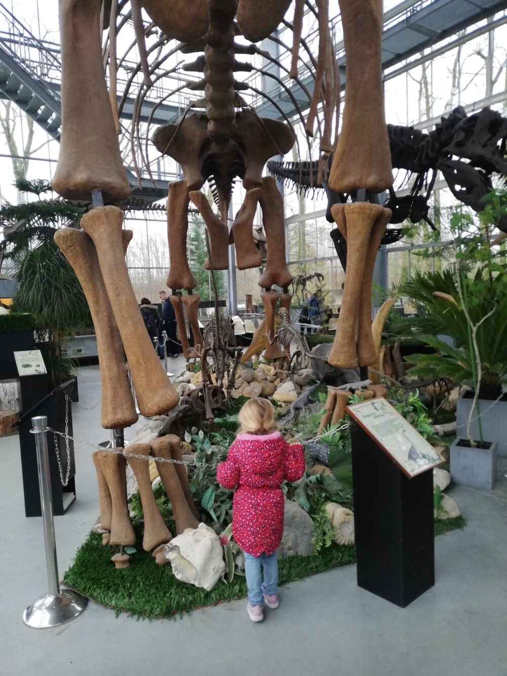 Oertijdmuseum-Boxtel-dinosaurussen