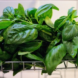 Pesto:  What's in a Name?