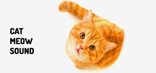 Cat Sounds | Orange Free Sounds
