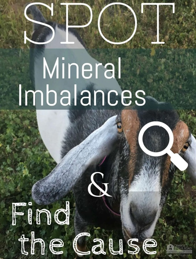 How to Spot Mineral Imbalances in Goats and Find the Cause