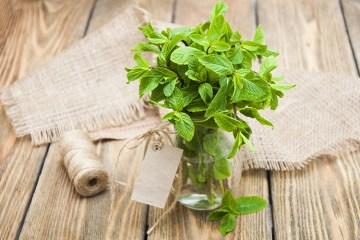 Refreshing mint leaves