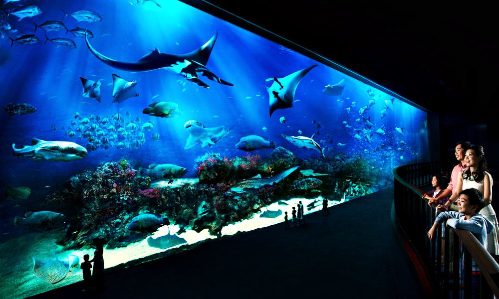 Image result for Marine Life Park
