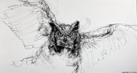 horned owl in black and white