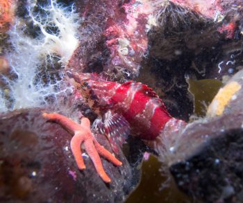 """Scott Groth says underwater photography is """"like diving into the best aquarium ever."""""""