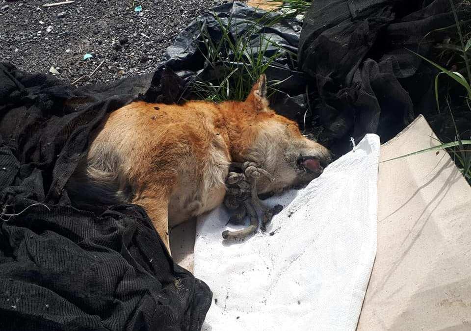 Terme Vigliatore. Cane trovato morto 'impiccato', urgono azioni per fermare 'scempio su animali'
