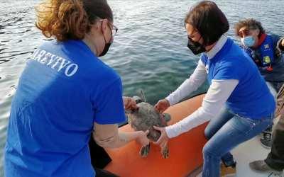Tartaruga marina liberata nelle acque dell'Area marina protetta