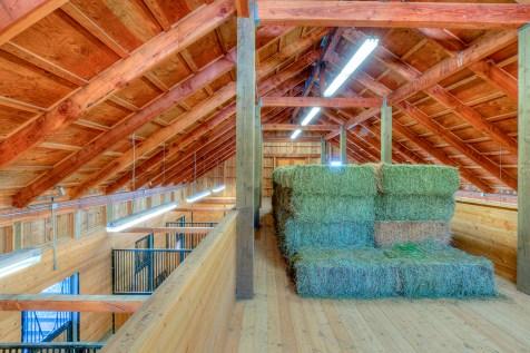 Horse Farm (40 of 46)