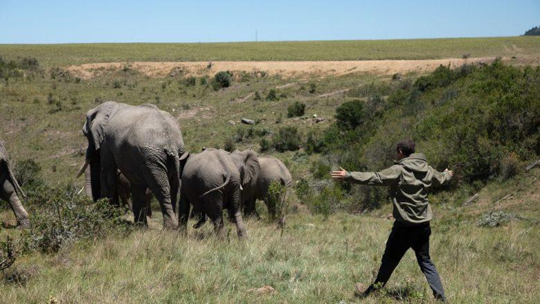 Resultado de imagen para animals on the loose a you vs. wild movie