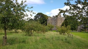 Elcho castle orchard