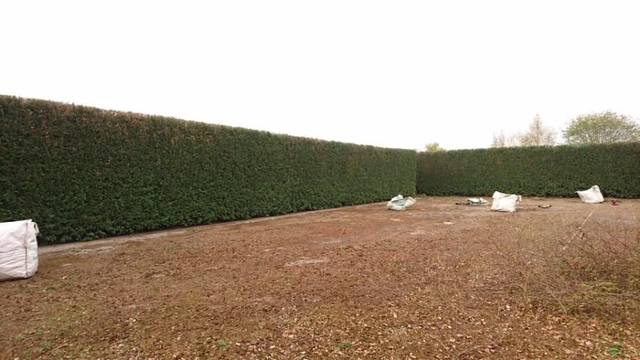 After Large Leylandii Hedge Reduction in Watnall, Nottingham