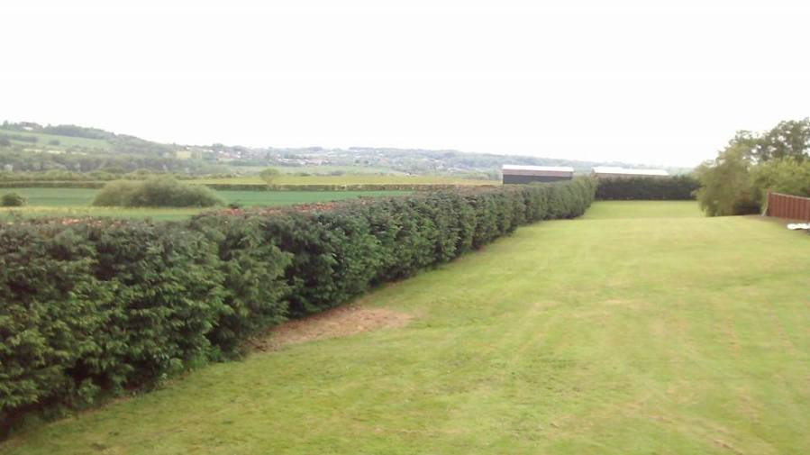 Hedge Trimming and Reduction, Nottinghamshire, NG16