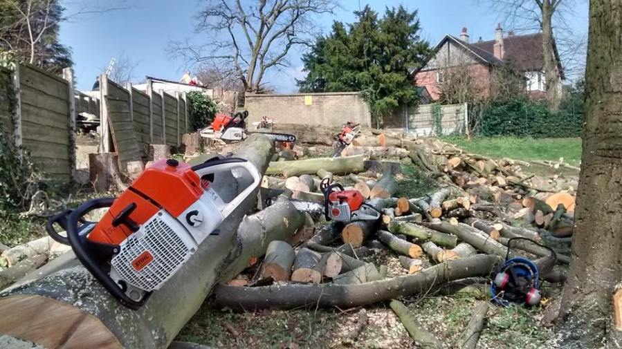 Tree Removal for a School in Eastwood, Nottingham, NG16