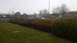 Shrub Clearance at Ilkeston Police Station Before
