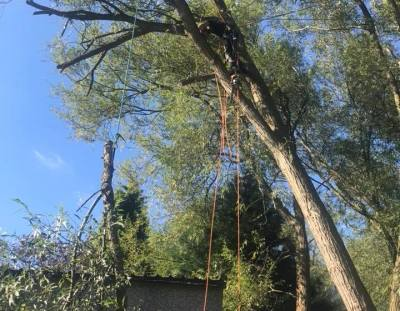 Dangerous Windblow Willow Tree Removal, Eastwood, Nottingham, NG16