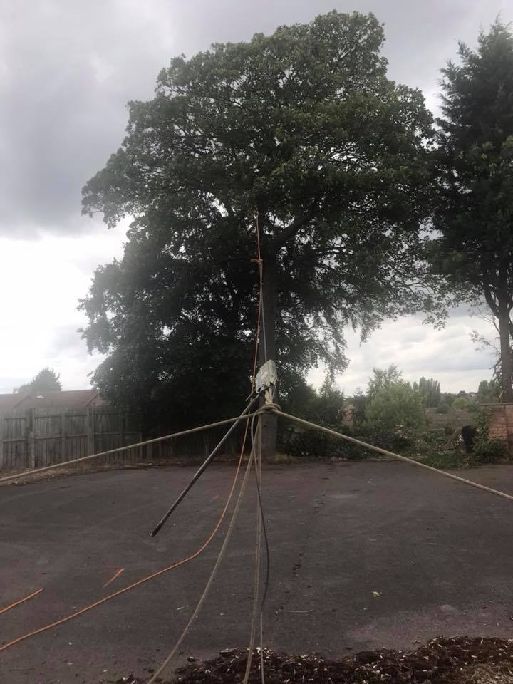 Professional Tree Rigging for Safe Removal