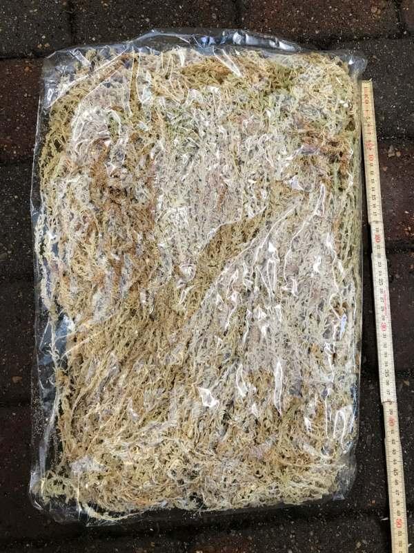 Sphagnum (vitmossa), extra lång i påse