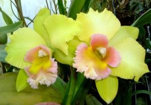 1-23.12.04 foto orchidee 052