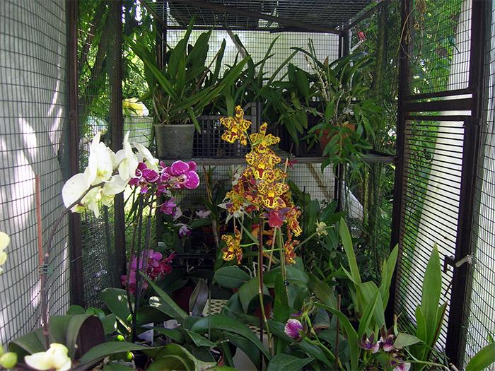 Coltivare - Orchidee da esterno ...