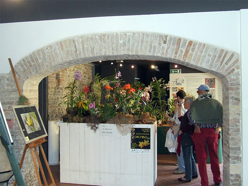 https://i2.wp.com/www.orchids.it/wp-content/orchids_uploads/2009/05/cattolica_09_insieme.jpg?w=800
