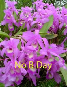 no_b_day