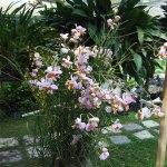 orchidee_schio_1