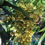 orchidee_schio_3