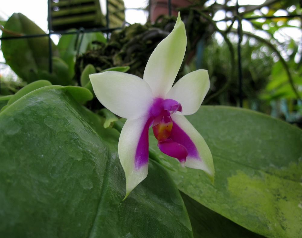 www.orchids.it