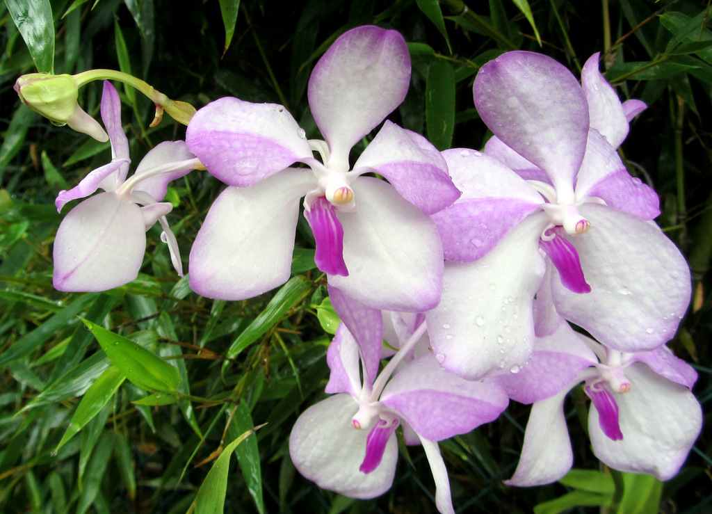 Orchidee, funghi e grigliata novembrina