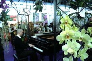 pordenoneorchidea_foto_pianoforte