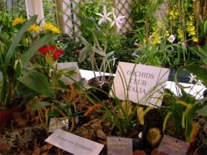 pordenoneorchidea_foto_pord_foto_orchidee