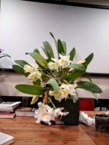gruppo_jacquard_fiori