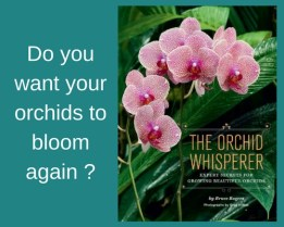 Get orchids to bloom again