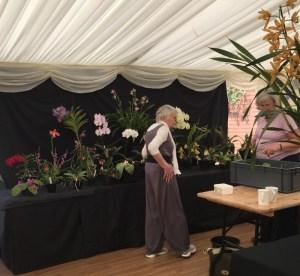 Devon Orchid Society
