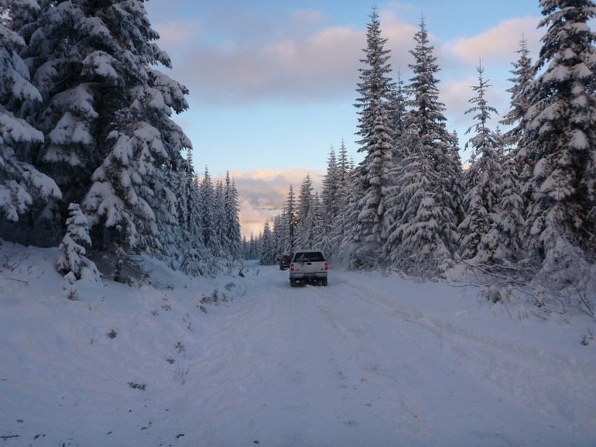 Snowy forest service road