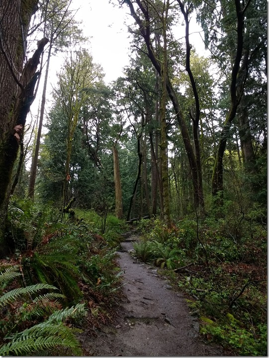 Andrew's Bay Trail Seward Park Old Growth Forest in Seattle