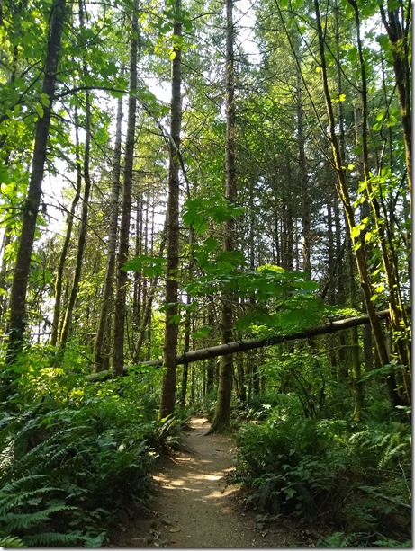 Forest along Chirico Trail to Poo Poo Point