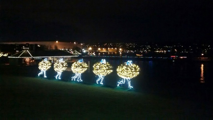 Clam Lights Unique Seattle Holiday traditions
