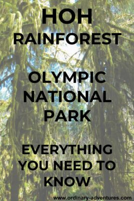 Tall trees thick with moss. Text reads: Hoh Rainforest Olympic National Park, Everything you need to know