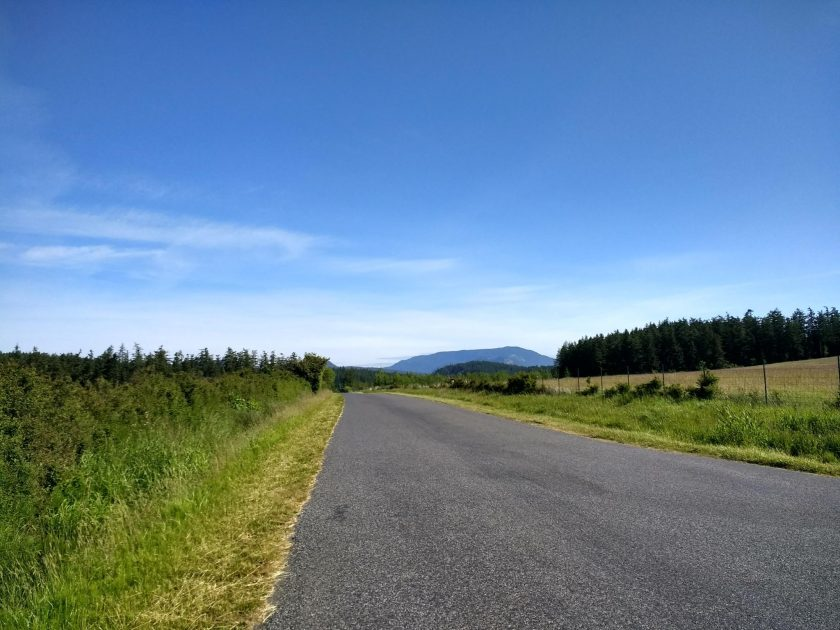 An empty country road goes between two fields. There are evergreen trees in the background