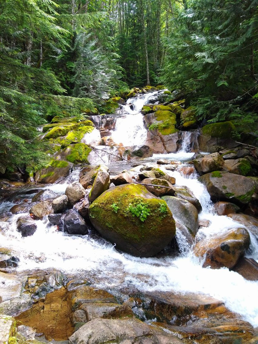 A river cascades among rocks in the forest