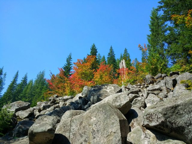 Looking up at a boulder field on the Talapus lake hike, there are fall color shrubs against evergreen trees and a blue sky