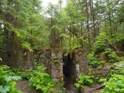 A concrete ruin is covered in lush temperate rainforest plants and trees