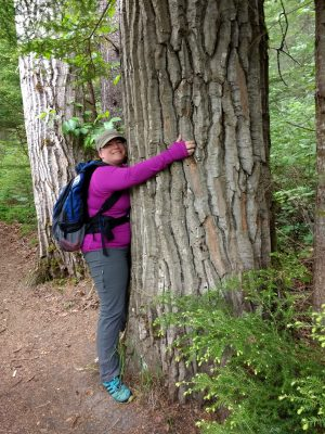 A women wearing gray pants and a long sleeved purple shirt is hugging an old growth tree next to a trail. She also has a blue backpack and a beige hat.
