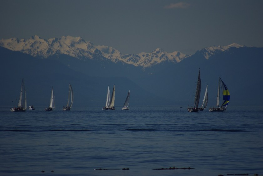 Several sailboats in the water off the coast. There are high snow covered mountains in the background