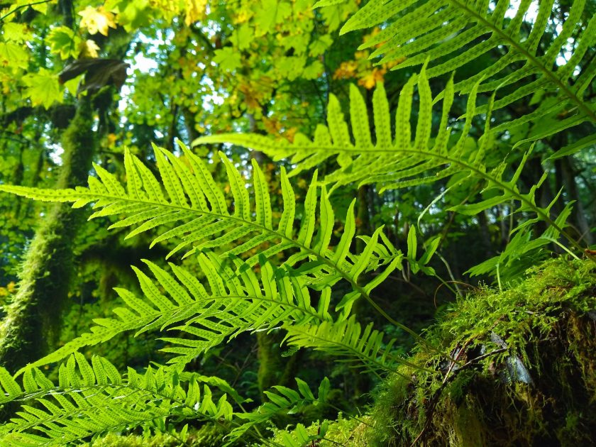 A close up of the bottom of bright green ferns and moss in the forest.